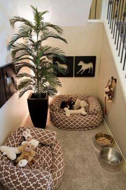 cat-room